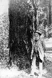 John Muir at Muir Woods National Monument