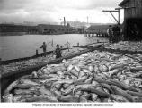 Fishermen with salmon catch at dock.