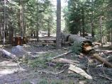 A dead tree lays across a campsite in the Manzanita Lake Campground. Removing trees like this before they fall is part of the current campground project.