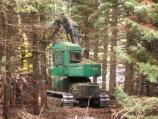 Feller-buncher removing hazard fuels (white fir) in Manzanita Lake Campground