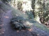 Much of the trail ascends and decends several times, one way.