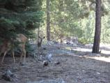 Mule Deer frequent the trail due to the abundance of food around the lakeshore.