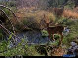 Mule deer doe and fawn in Hackberry Mountains area.