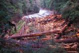 An enormous logjam formed downstream of the Ohanapecosh Campground.