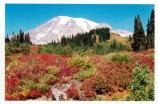 An autumn view of Mount Rainier from Paradise.