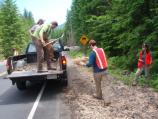 Members of SCA's Mount Rainier Recovery Corps lay straw to help with erosion control around the reconstructed roadway at Kautz Creek.