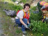 Exotics Removal Teams pull weeds in high-visitation areas like Longmire