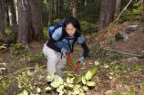 A volunteer helps clear brush near Narada Falls
