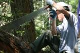 A volunteer uses a crosscut saw to clear a log from a rerouted section of the Wonderland Trail south of Cougar Rock Campground, on National Trails Day.