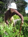 SCA Crew Leader Susan Simpson conducts trail maintenance at Paradise in Mount Rainier National Park.