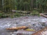 Ipsut Creek flows through a damaged section of the Carbon River Road