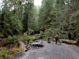 Trail crew members inspect the Carbon River Road
