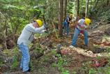 Volunteers help rebuild a damaged section of the Wonderland Trail below Cougar Rock on National Trails Day, June 2nd.