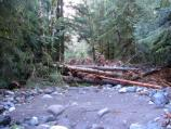 Logs and debris cover the Carbon River Road above Chenuis parking area.