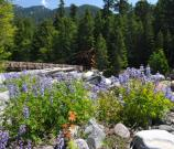 While Mount Rainier's subalpine meadows slowly emerge from winter snowpack, wildflowers already bloom in lower elevation areas. These Lupine flourish among the rocks near the Nisqually River, with the Longmire Bridge in the background.