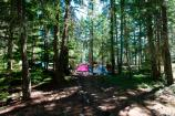 Tents and campsite set up with trees surrounding the site