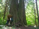 Hikers stand beside a tree on the Big Beaver Trail.