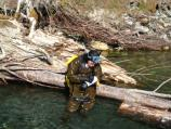 Biologist records information during Elwha River snorkel survey.