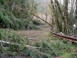 High winds and heavy rain left the Quinault Valley littered with debris and fallen trees.