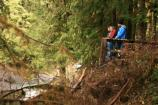 Visitors watch for leaping salmon at the Salmon Cascades overlook in early November