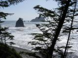 Beach through the trees, Olympic coast