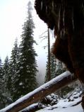 Snow surrounds the Cliff Nature trail.