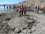 2012 Sand Sculpture Contest: Children's Group Entry #01: Turtle Island, by the Roberts/Waeries kids