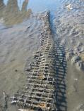 Section of plastic mesh on sandbar 17. Most of the approximately 15 feet by 50 feet mesh is buried by mud and sand.