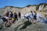2004 Sand Sculpture Contest: Adults' Group Entry #32: Dune Bug, by the Paulosaurus Family