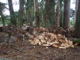 Firewood from Eucalyptus: Once removed, eucalyptus is being used for firewood at Kule Loklo. Fire is part of many ceremonies in the Round House and is also needed to produce heat for the Sweatlodge.