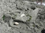 2008 Sand Sculpture Contest: Children's Group Entry #03: Mermaid, by Grace Bailey, Liza and Weston