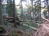 The Jakle's Lagoon trail was choked with uprooted trees in the wake of the December 14/15 windstorm that rocked the Pacific Northwest.