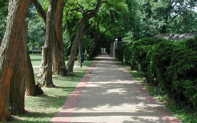 A tree-lined sidewalk