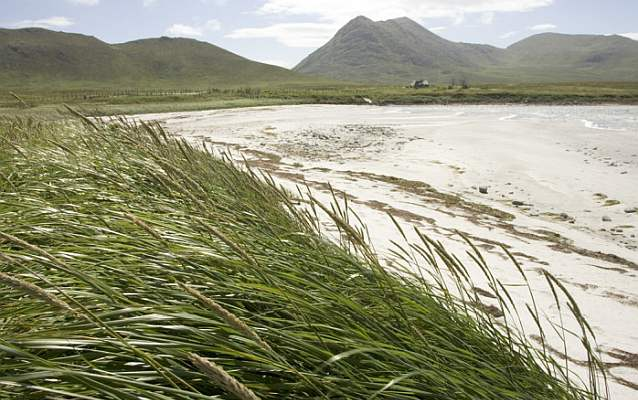 tall grasses blown by the wind on a beach in front of mountains