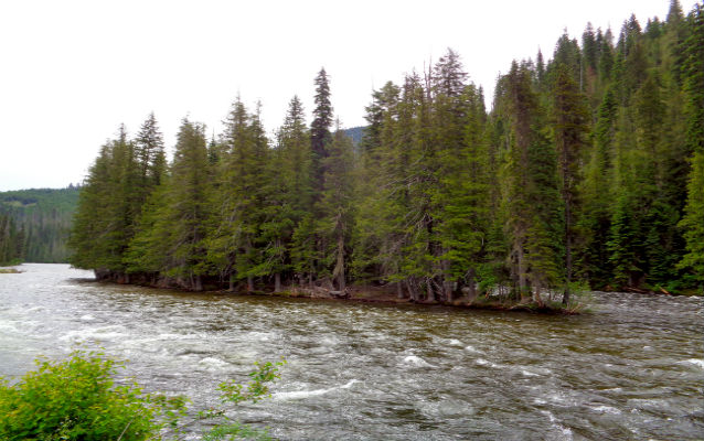 Flowing river near evergreen trees
