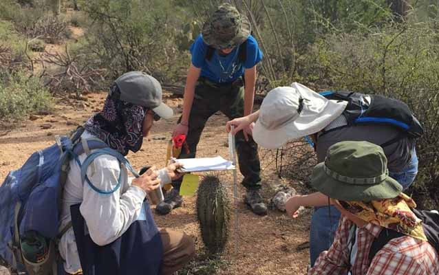 Volunteers measure the height of a young saguaro during the Centennial Saguaro Survey.