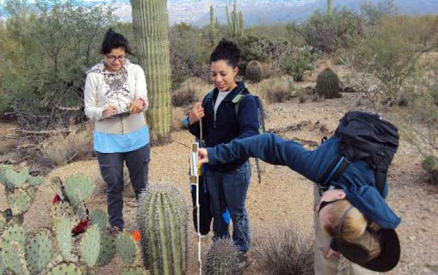 Two youth interns and a volunteer measuring a saguaro
