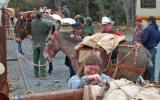 Park staff participates in mule packing safety training.