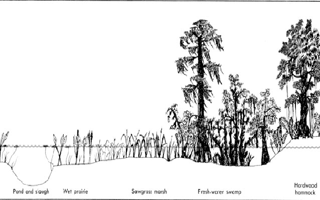Habitats of the swamp