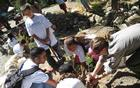 First Bloom Participants plant trees in Devils Postpile National Monument