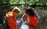 Two students collect dragonfly larvae in a pond.