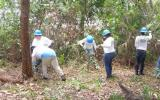 Green team crew clearing brush