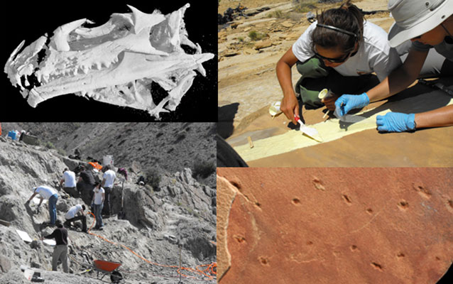 Four images of paleontological research in Dinosaur National Monument