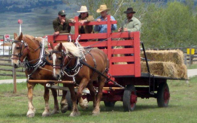 Park staff driving a team a horses.
