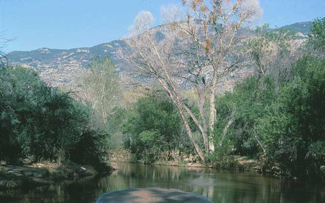 Photo of Rincon Creek