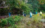 Volunteers remove overgrown vegetation during National Public Lands Day.