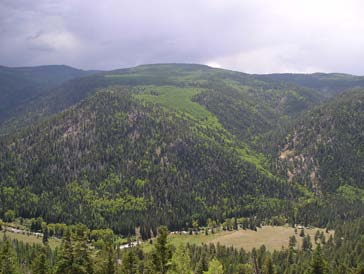 Patches of quaking aspen forest (light green) in mixed conifer forest (dark green).