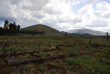 Past crown fire replaced forest with grassland in northern Arizona.
