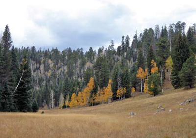 High-elevation ecosystems, like this mixed conifer forest, are particularly sensitive to warming.