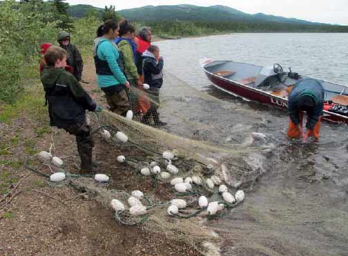 eight adults and kids pulling a net of fish out of a lake